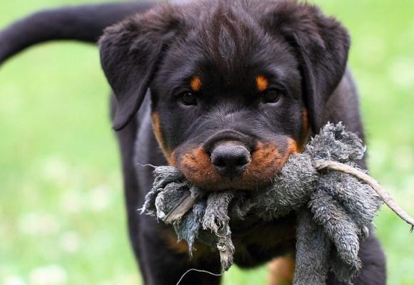 Träning i hundens olika åldrar