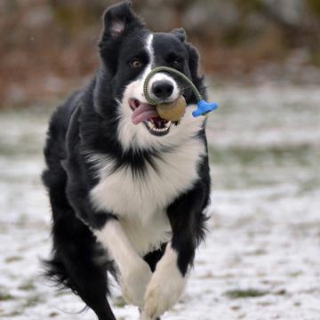 Årets SBK-hund utsedd!
