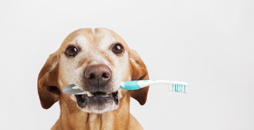 Värmlänningar bäst på att borsta tänderna