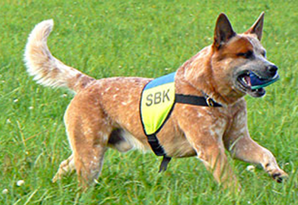 Enkät om träning, motion och skador hos tävlande hundar