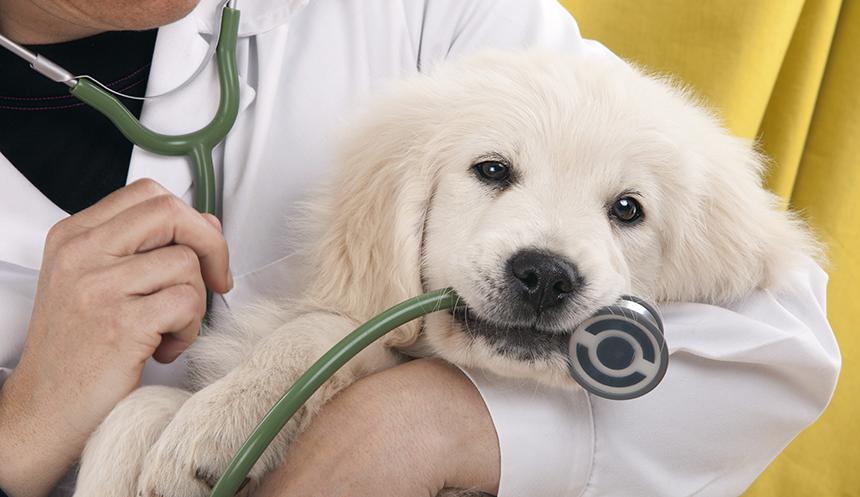 Då ska du uppsöka veterinär