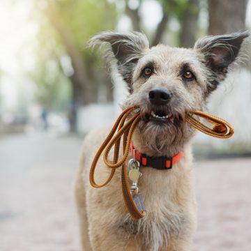Restriktioner för lösa hundar