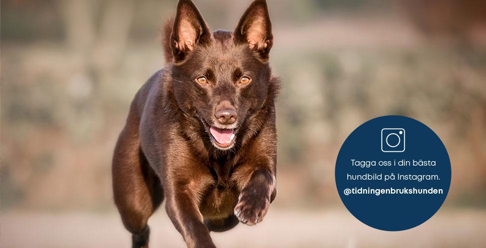 9 tips för lyckade hundbilder