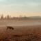 Hundar fast i rävfälla