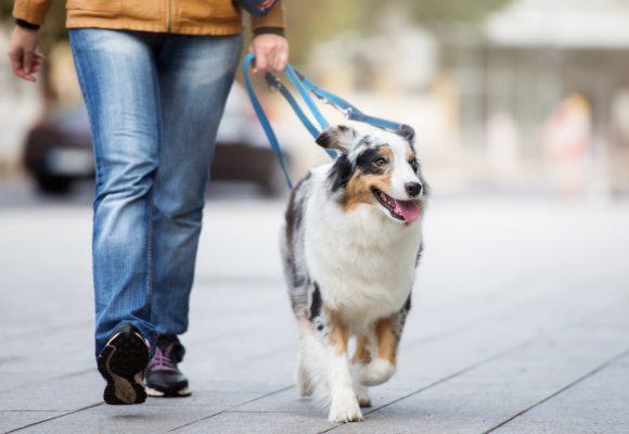 Museiguidning med hundträning