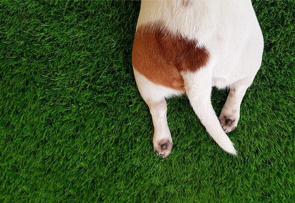 Robotgräsklippare ser hunden