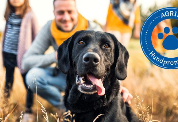 Häng med på landets största hundpromenad!