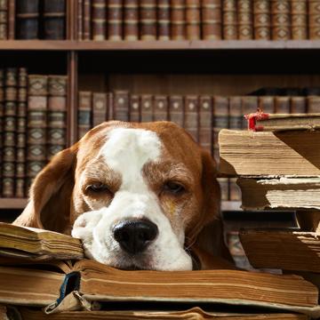 Nya djurskyddslagen – det här gäller hundägarna