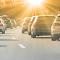 3 hundar i trafikolyckor – varje dag
