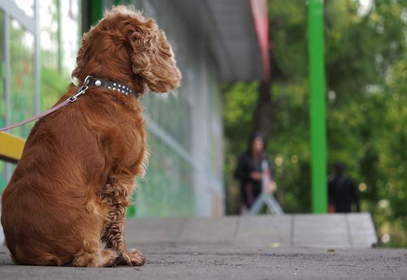 Hundar välkomna i många klädbutiker