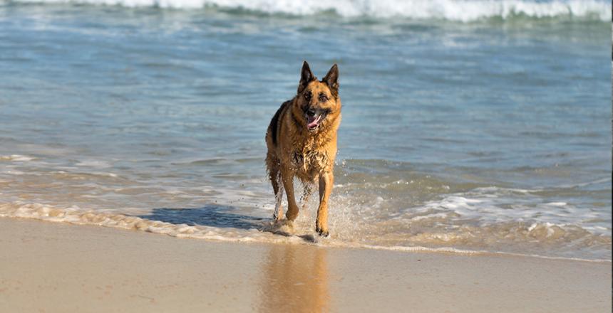 Här blir det lättare att bada med hunden!