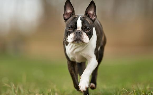Här är Sveriges dyraste hundar
