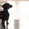 Här får hundarna en egen jobbkorridor