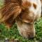 Specialsök – hundens egen hjärngympa