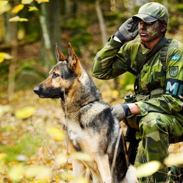 Testa HLR för hund
