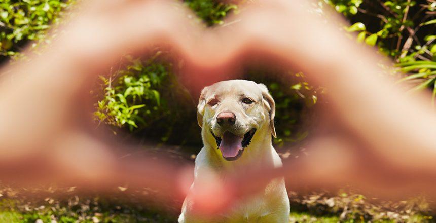 Lättare bli kär i hunden än en partner