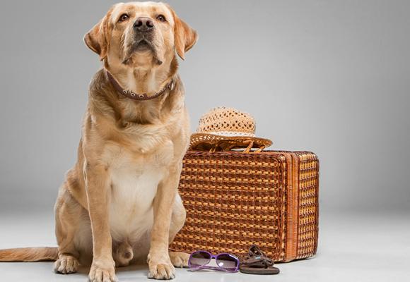 Ta hunden med på resan – detta gäller