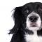 Hunden avspeglar ägarens stress