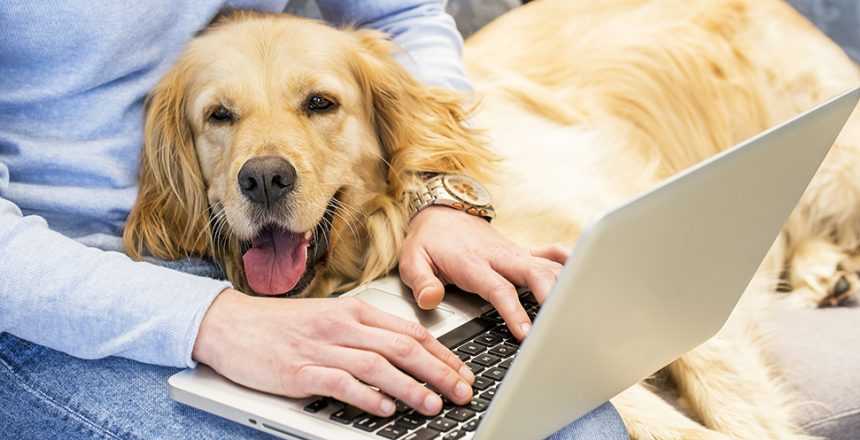 Därför ska du ta med hunden på jobbmöten