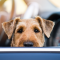 Smart parkering för hunden i sommar