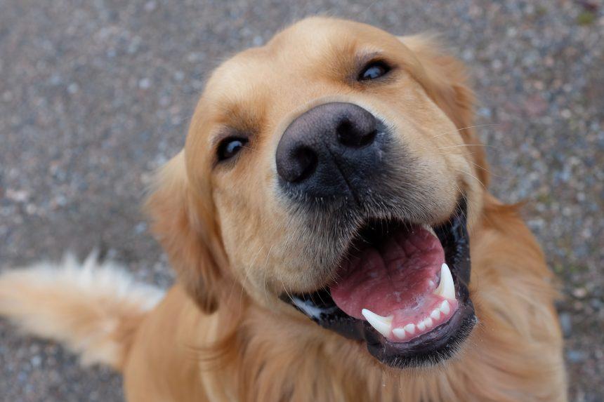 Hundar får oss att överleva