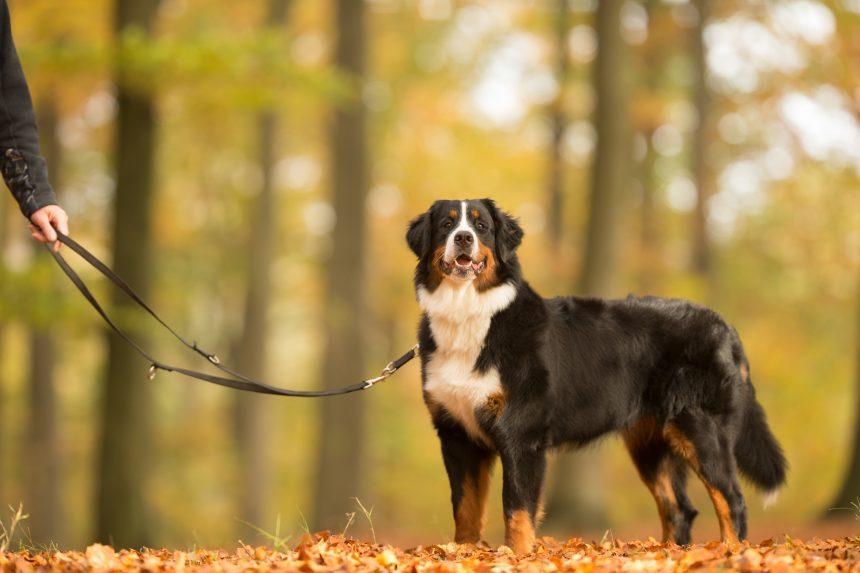 Boka bud för att ta ut hunden?
