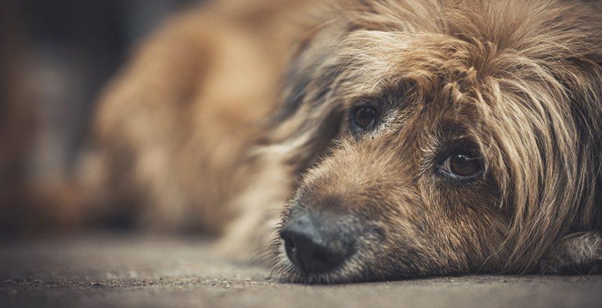 Dömd för djurplågeri – får behålla hunden
