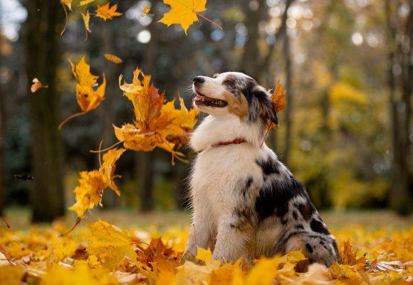 Falskt alarm om svensk smittad hund