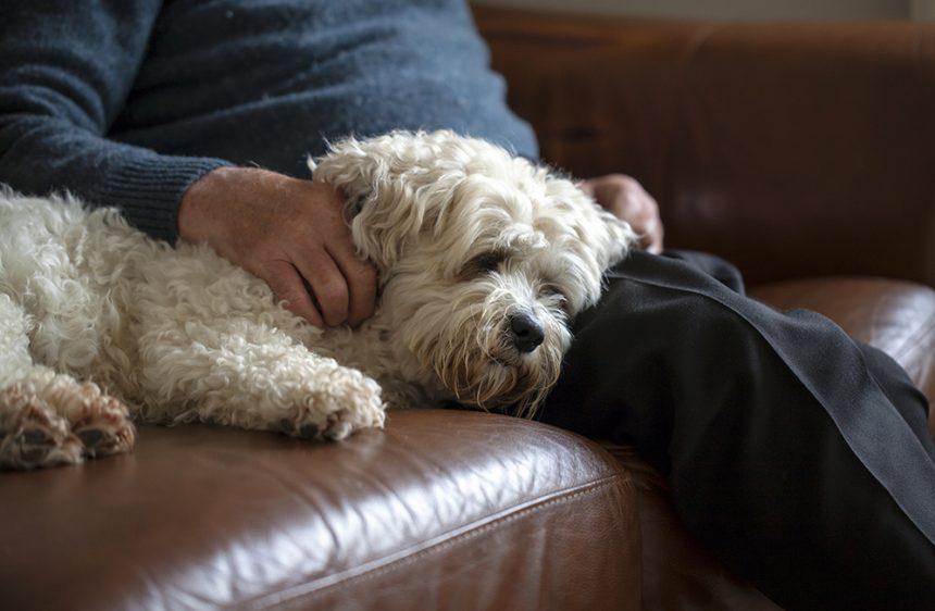 Piteå förbjuder hundar på äldreboenden