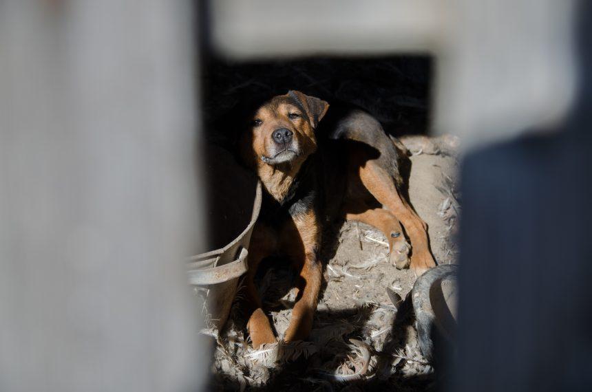 Dokumentär om smuggelhundar