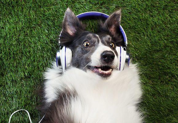 Lyssning för hundnördar