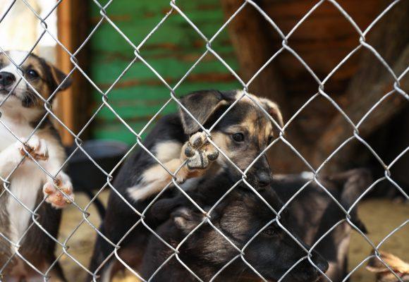 Husdjurshjältar får pris