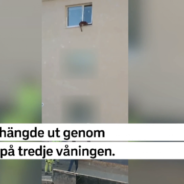 Räddade hund från fall från tredje våningen