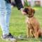 Motala Brukshundklubb examinerade nya skrivare i rallylydnad