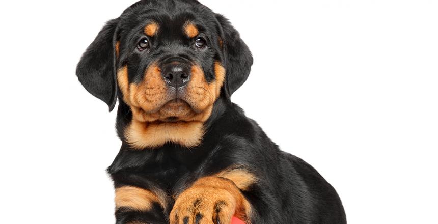 Kul inomhusaktiviter för hunden