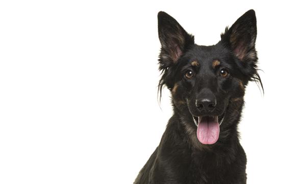 Dalarna har fått sin första hundträningshall
