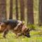 Hundar bidrar till aktivt friluftsliv