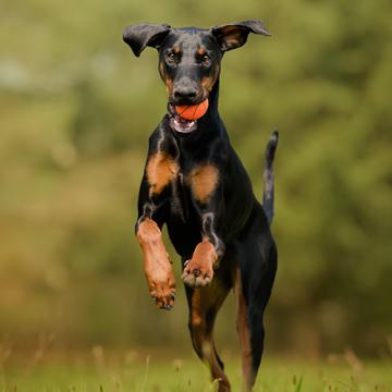 Tidaholms Brukshundsklubb flyttar