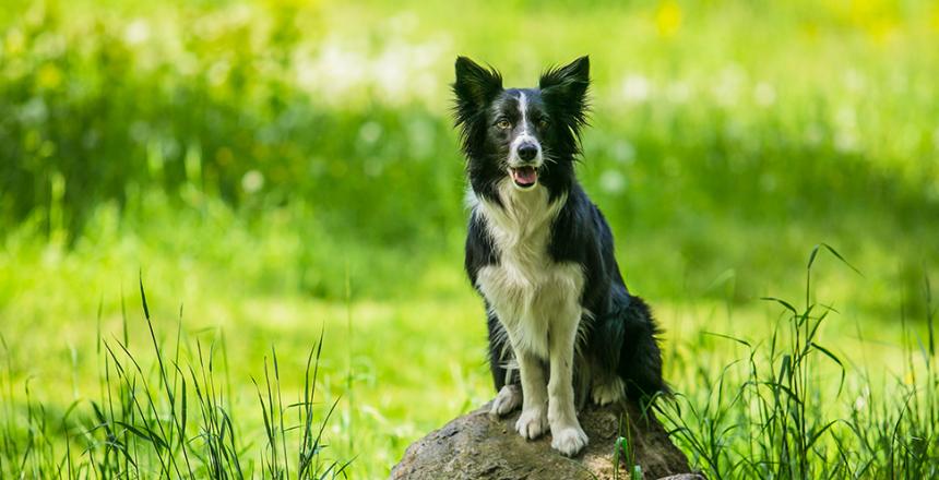 Falkenbergs första hundrastgård invigd