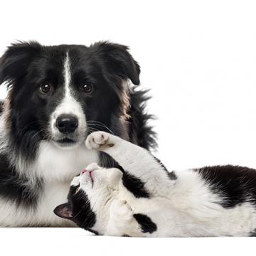 Hundar är smartare än katter
