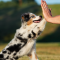 Cirkelträna med hunden