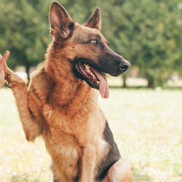 Hundar underlättar integration