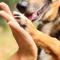 Bättre överlevnad efter stroke för hundägare