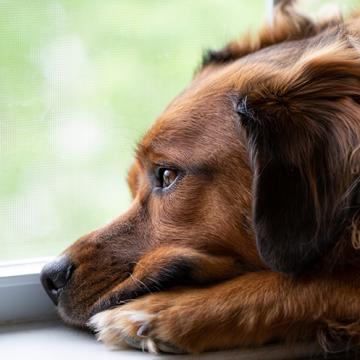Svenska Brukshundklubben skjuter på arrangemang för att minska smittspridningen