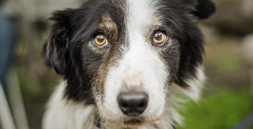 Rädslor och tvångsbeteende vanligt hos hundar
