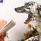 Utbilda dig till hundpsykolog