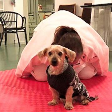 Judo ska lära hundar falla rätt