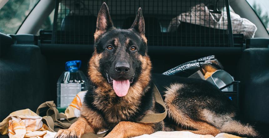 Bättre bilförare med hund ombord