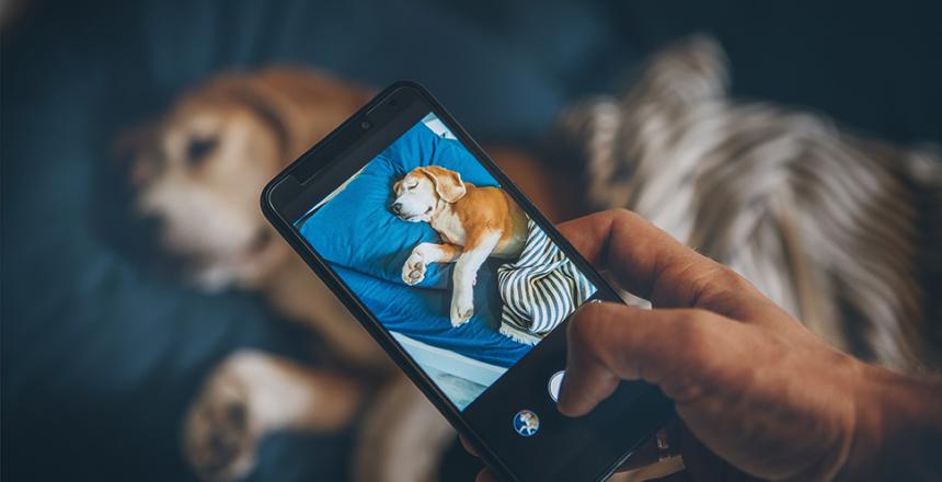 Brukshunden tipsar: Så tar du snygga bilder på din hund