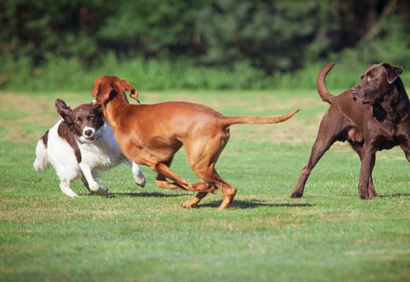 Två nya hundrastgårdar i Sala